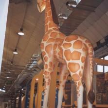 Giraffa (Immagine 4)